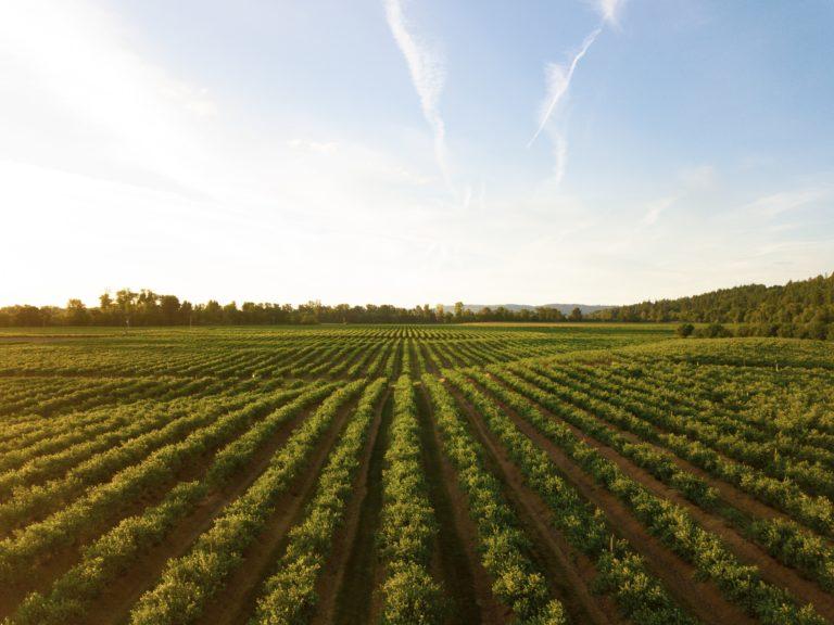 Bodenschmiede, der Ideenwettbewerb zur Zukunft des Ackerbaus